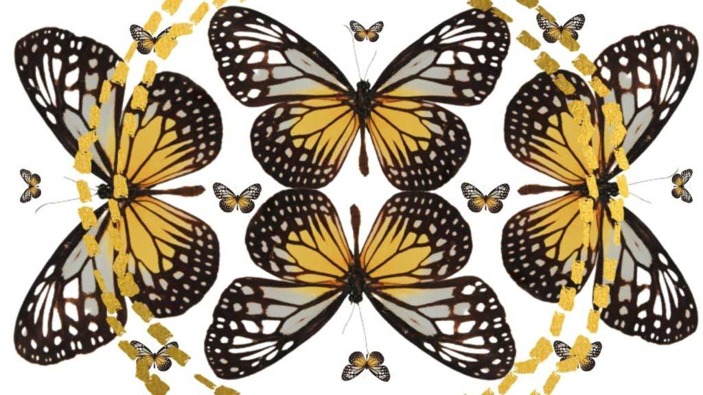 A photo of butterflies